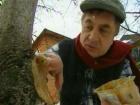 В этом выпуске ведущий Андрей Туманов отправится к дачнице Наталье, которая не знает, что делать с почерневшей рассадой, и к огороднице Татьяне, которая хочет узнать, что такое «картофельная баня».