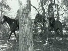 Жителя Самары  остановил  конный патруль, стражи порядка привязали его к одной из лошадей. Она сорвалась с места и потащила за собой задержанного.  От полученных травм тот скончался