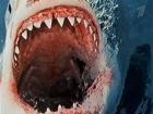 В  Шарм-эль-Шейхе зафиксировано пять случаев нападений акул на людей, одна из пострадавших скончалась.  Почему египетский пляж стал декорацией к фильму ужасов?