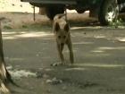 В программе «ЖКХ» обсуждается ситуация в подмосковном городе Лыткарино, жители которого страдают от нападения бродячих собак