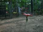 В программу «ЖКХ» обратилась семья Лазаревых, на родовом захоронении которых без их ведома демонтировали оградку и убрали часть могил