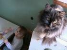 В студии «Пусть говорят» пытаются понять, почему мать двухлетнего ребенка предпочла кошек сыну, и можно ли оставлять малыша в этом кошачьем царстве