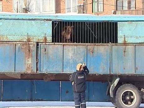 Жители города Богородицка Тульской области спасают от холода и голода животных передвижного цирка