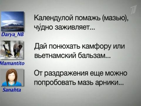 1 канал интрнет прямой эфир: