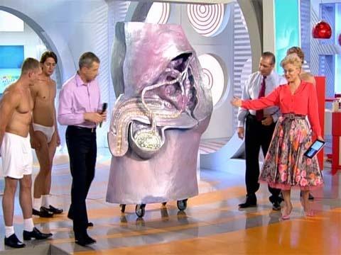 Мужские органы с фото размеры фото