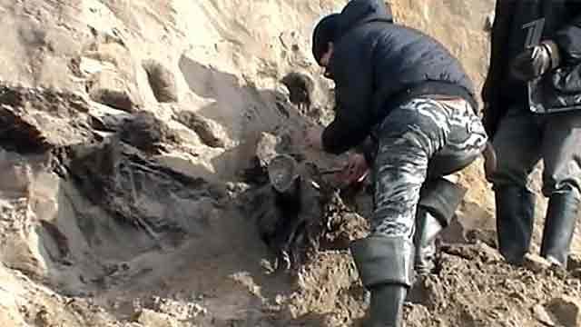 На Таймыре нашли хорошо сохранившиеся останки мамонта. Фото, видео смотреть