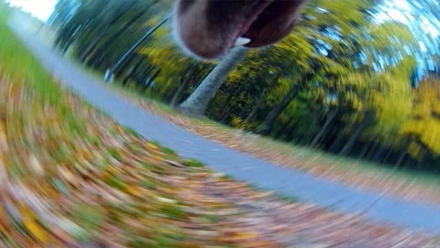 В Белоруссии собака бегает с фотоаппаратом и делает удивительные снимки