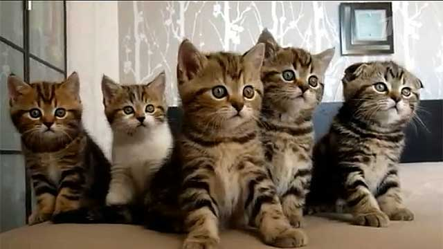 картинки кот хулиган