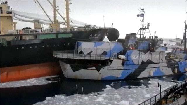 Нешуточная схватка разыгралась у берегов Антарктиды между японскими китобоями и защитниками животных