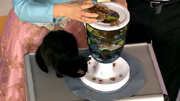 Как сделать автоматическую кормушку для кошки