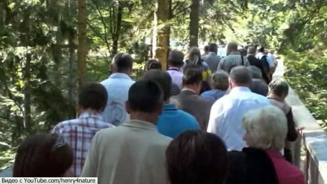 Прогулку по верхушкам вековых деревьев предлагает посетителям национальный парк в Германии