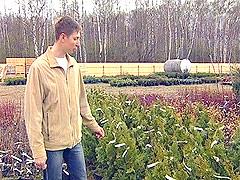 Как вырастить виноград на севере